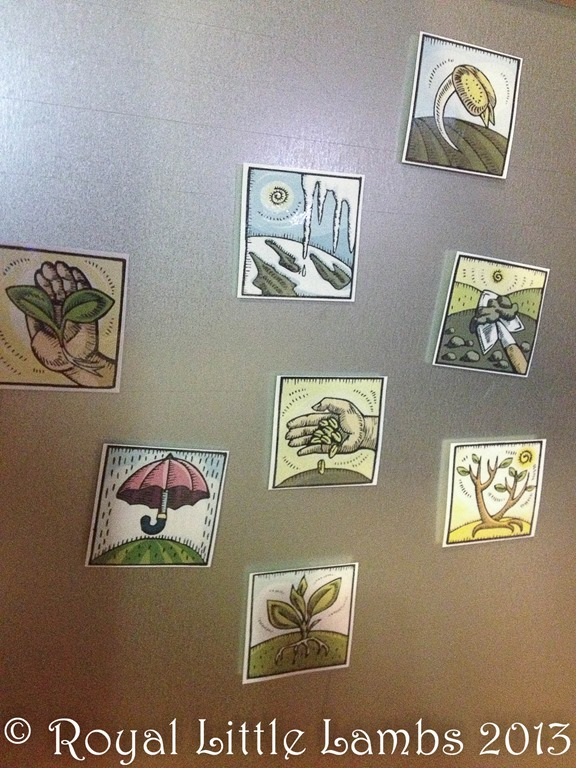 plant life cycle magnets