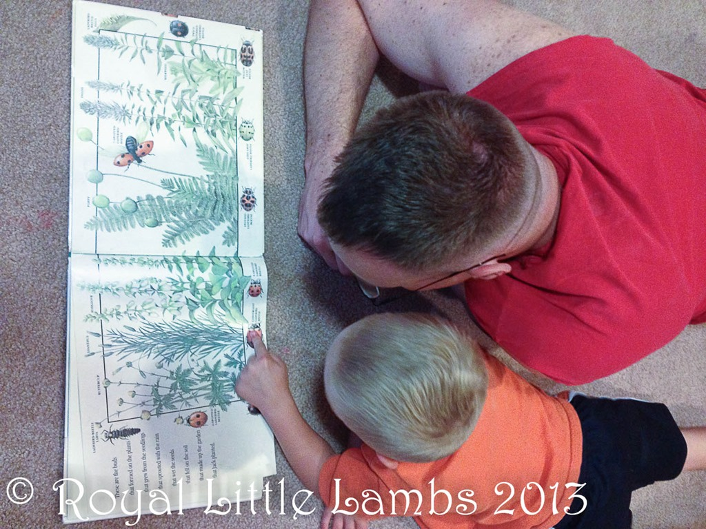 reading about bugs with Dad