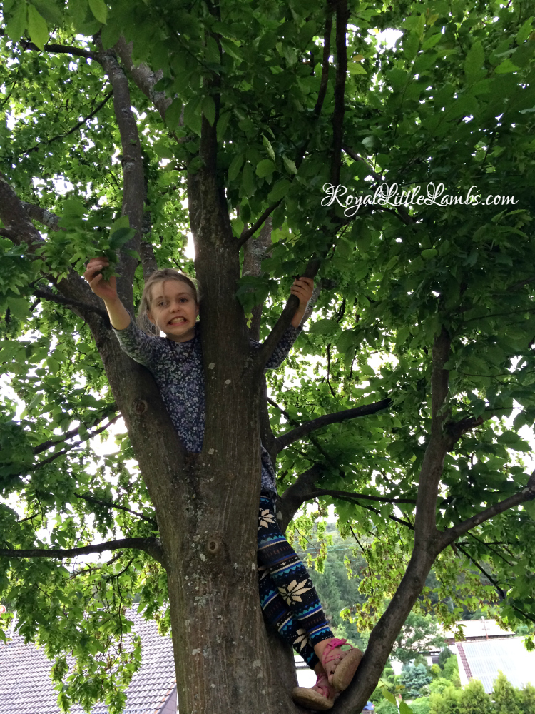 Climbing trees at the park