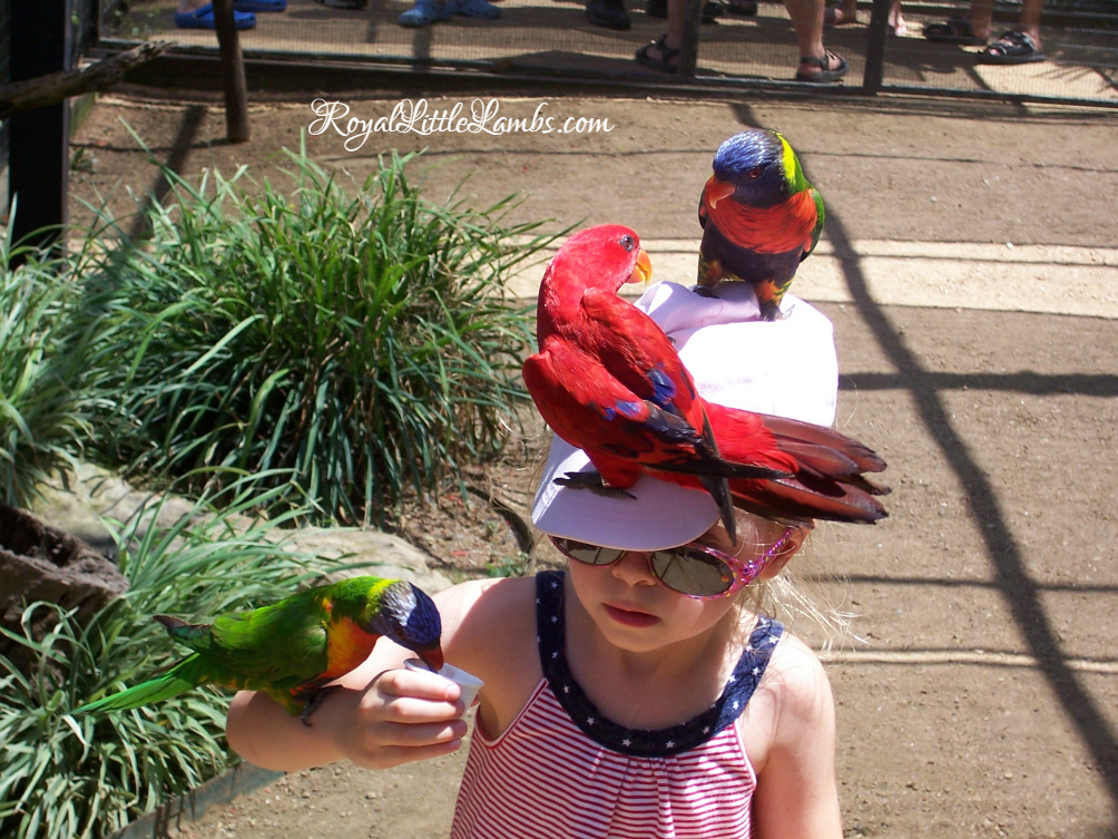 Feeding the Lorikeets at SeaWorld