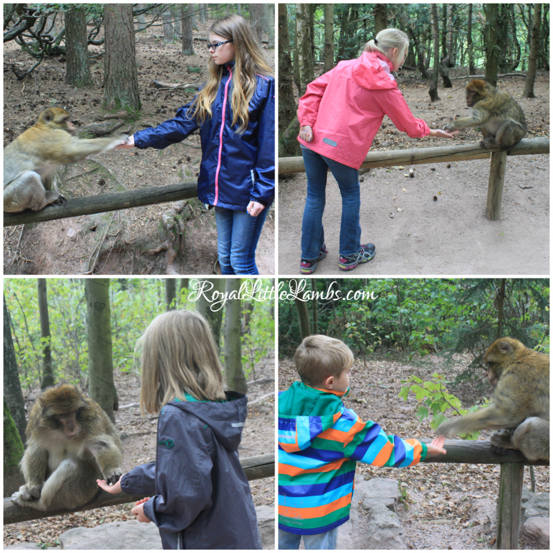 Kids Feeding the Monkeys