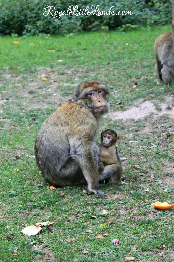 Mother and Baby Monkeys