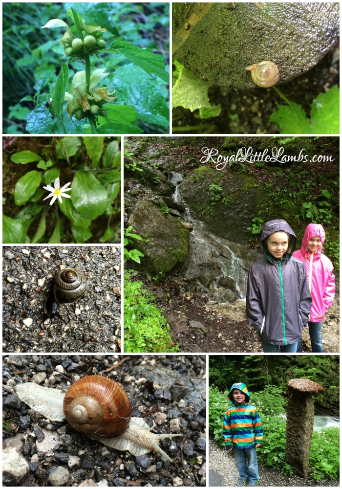 Partnach Gorge Snails and Flowers