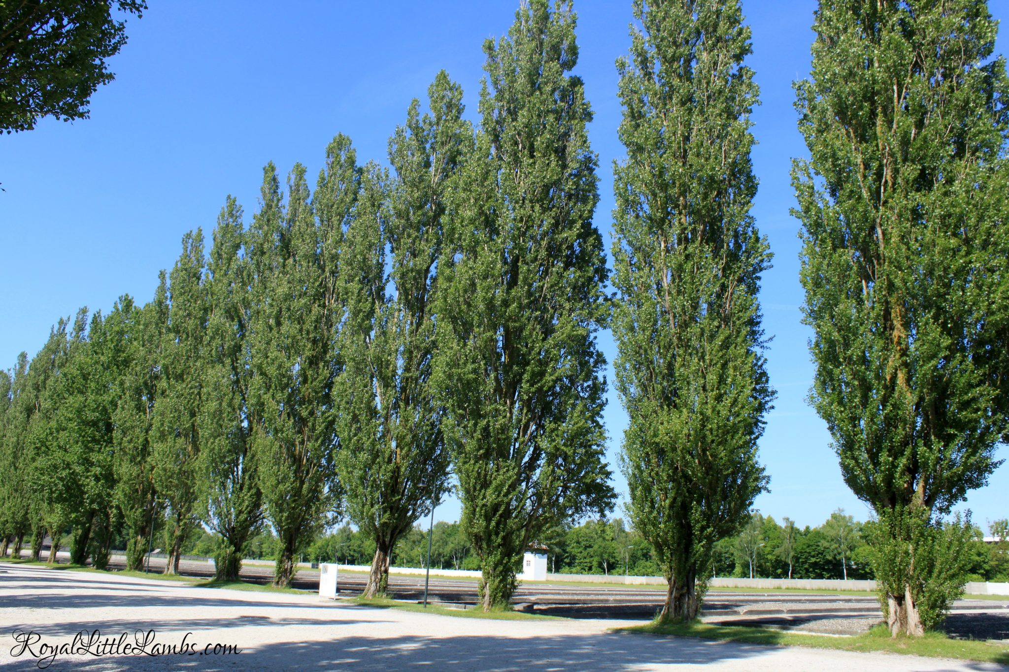 Poplars and Barracks Foundations