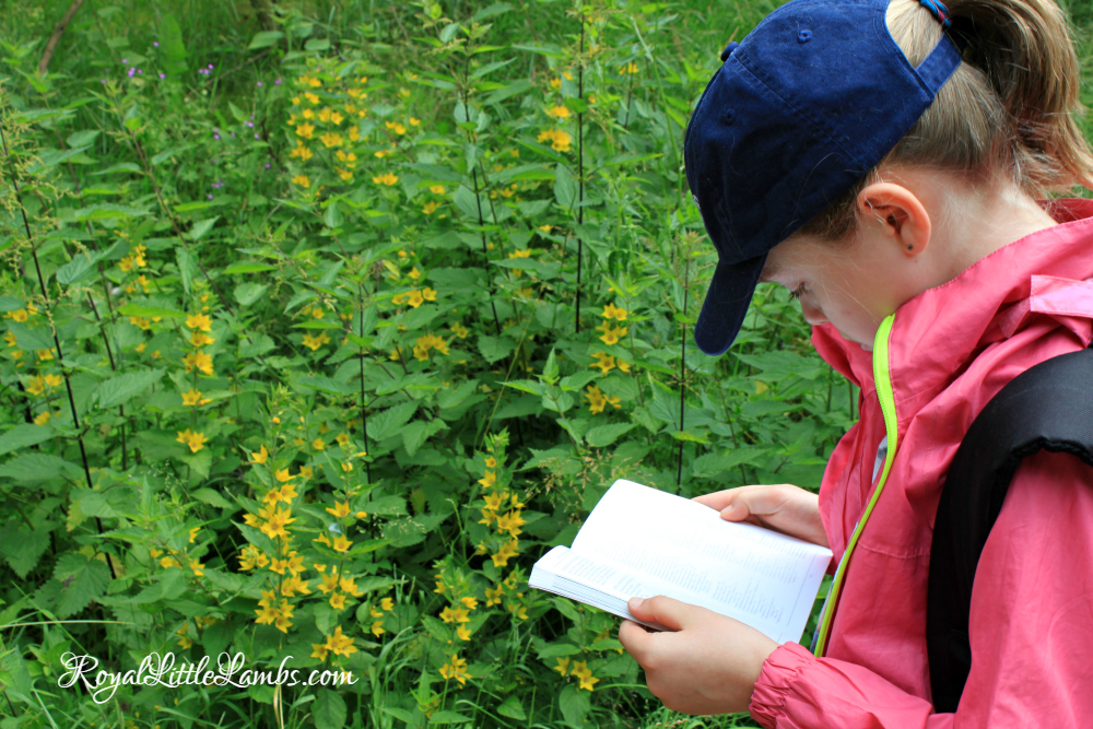 Wildflower Guidebook