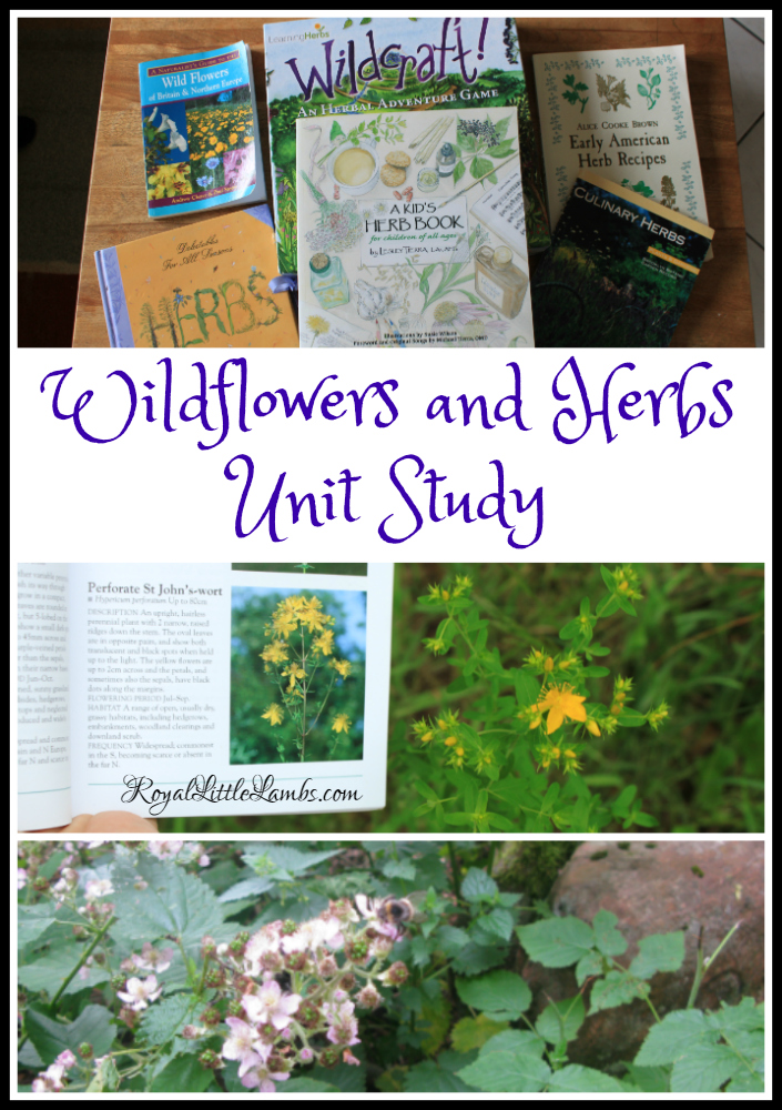 Wildflowers and Herbs Unit Study