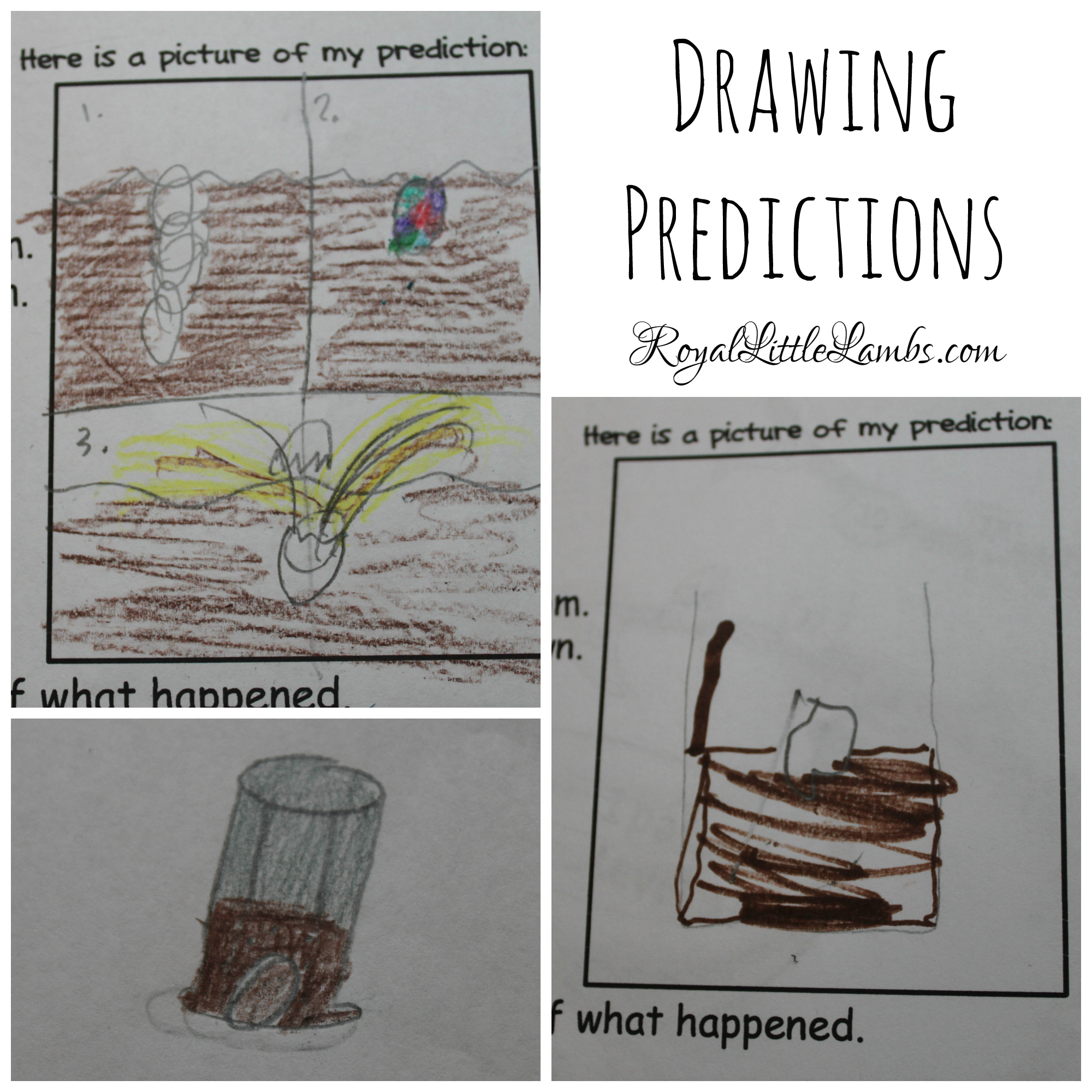 Drawing Predictions