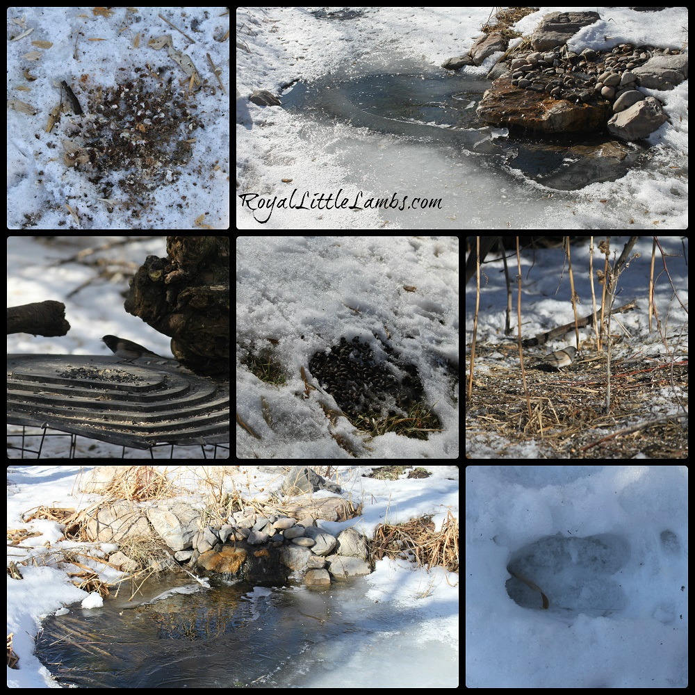 Evidence of Animals in Winter