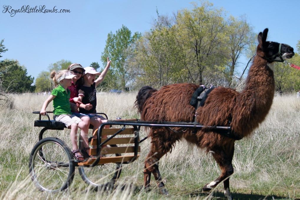 Llama Cart
