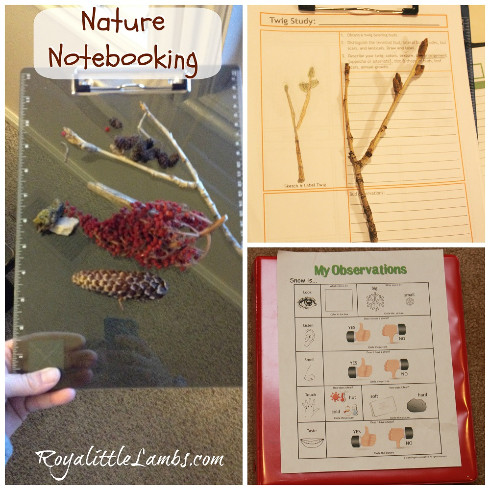 Nature Notebooking