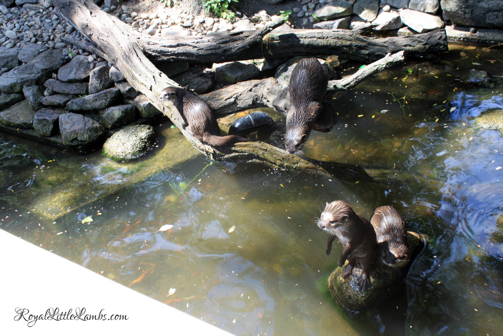 Otters Begging