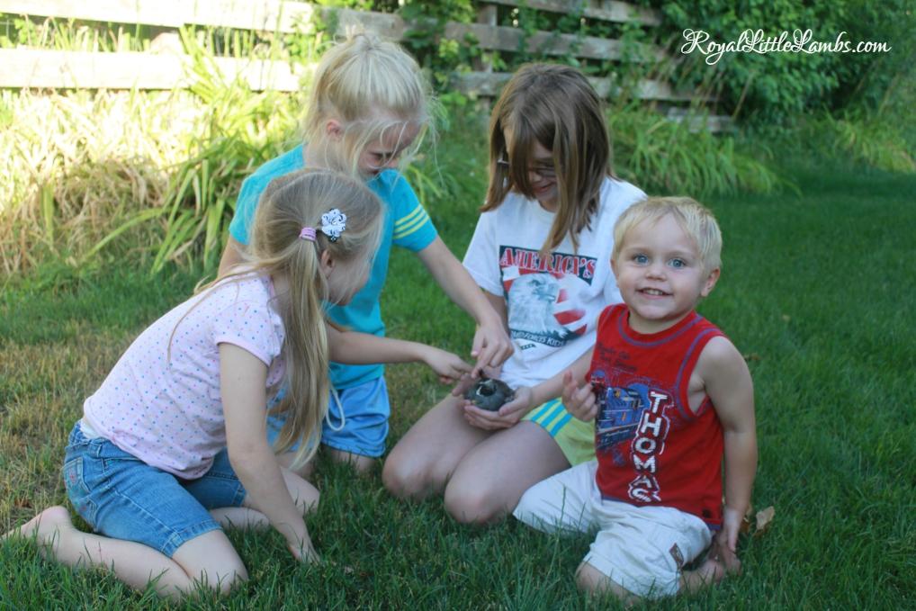 Petting a Baby Quail