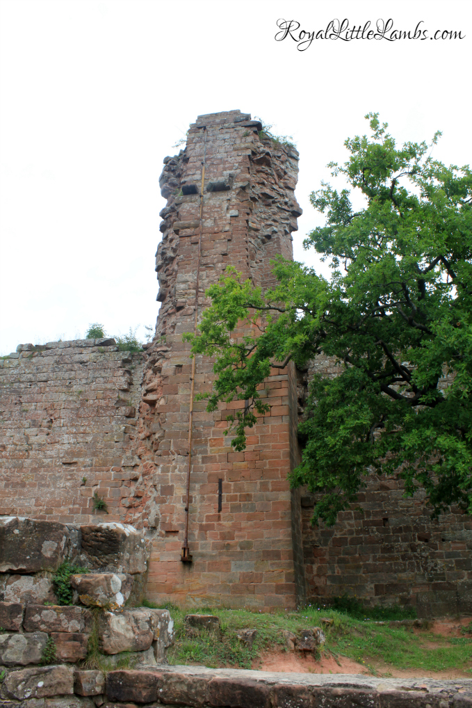 Tower and Courtyard Tree