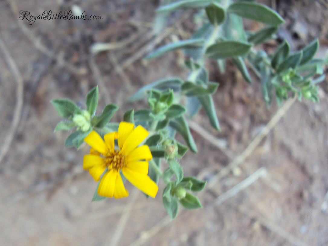 Yellow Wildflower