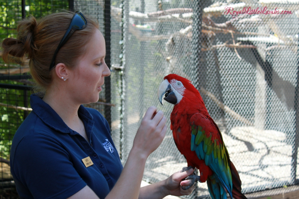 Zookeeper with a Macaw